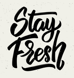 Stay fresh hand drawn lettering isolated on white vector