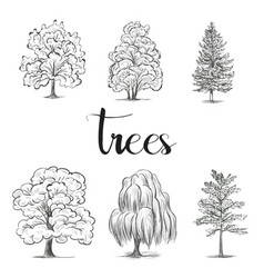 trees sketch set graphic forest vector image