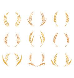 wheat or barley ears harvest wheat grain growth vector image