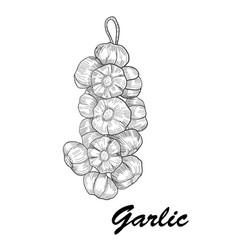 Hand drawn garlic stylized black and white vector