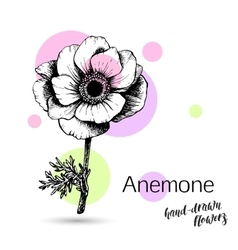 Anemone flower for wedding or birthday card vector image vector image