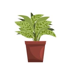 Dieffenbachia indoor house plant in brown pot vector