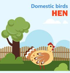 domestic bird hen vector image