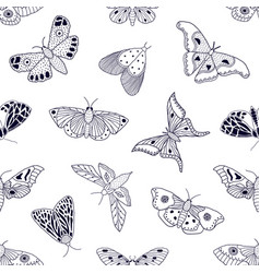 pattern with hand drawn butterflies and moths vector image