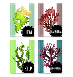 Realistic sea weeds posters set vector