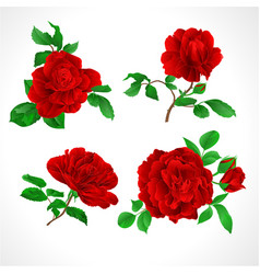 red roses with buds and leaves vintage vector image