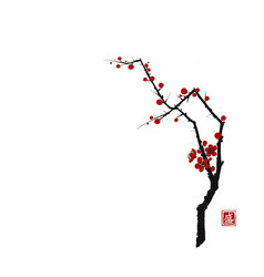 sakura cherry tree blossom on white background vector image