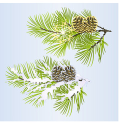 set of christmas and new year decoration branches vector image