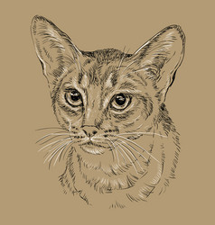 Abyssinian cat on brown background vector