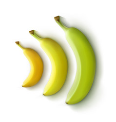 Set of bananas vector
