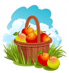 basket with apples vector image