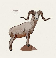 argali or mountain sheep species ovis vector image