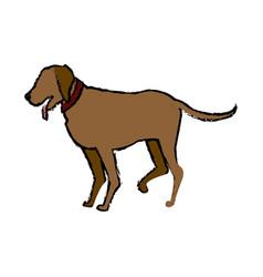 brown dog pet domestic animal vector image