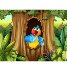 A parrot inside a tree hollow vector image vector image