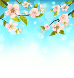 Cherry Blossom Branches of Tree Natural Glowing vector image
