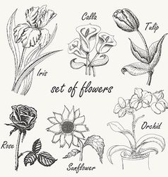 Hand drawing set of flowers Iris calla lily tulip vector