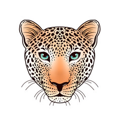 Leopard muzzle on white vector