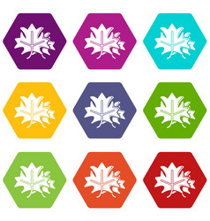 maple icons set 9 vector image