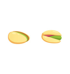 set pistachio nut in cartoon vector image