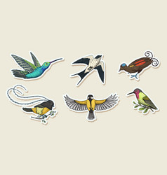 small birds paradise stickers wilson s and vector image
