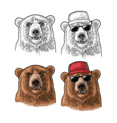 Bear head vintage color engraving vector