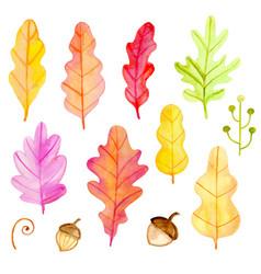 set watercolor oak leaves vector image