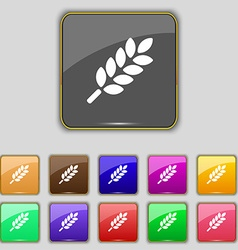 Wheat Ears Icon sign Set with eleven colored vector