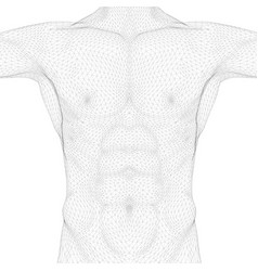 Wireframe polygonal body a man front view vector