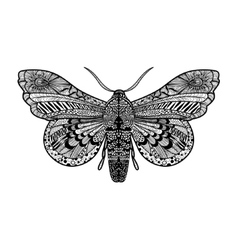 Hand drawn magic butterfly vector image vector image