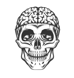 skull with open brain vector image