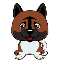 dog american akita breed laughs with his tongue vector image