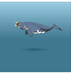 Right whale whale realistic flat vector