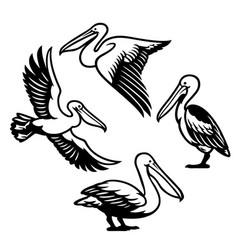 Set pelican bird vector