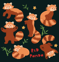set red pandas in different poses graphics vector image