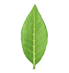 tobacco leaf isolated vector image