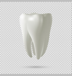 realistic tooth icon isolated on vector image vector image