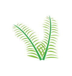 pair of olive branches vector image