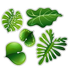 Sticker set of green leaves vector image