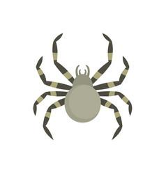 Tarantum spider icon flat style vector