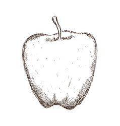 Apple fruit draw vector