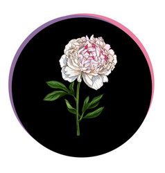 Beautiful peony flower in a black circle floral vector
