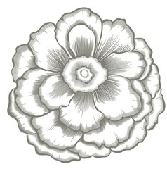 Hand painted flower vector