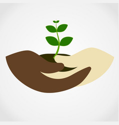 human hand holding green small tree vector image