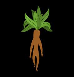 Mandrake root isolated legendary mystical plant vector
