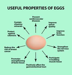 useful properties of chicken eggs infographics vector image
