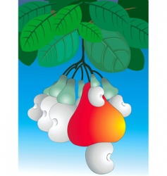 cashew nut vector image vector image