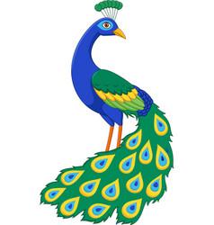 Cartoon funny peacock vector