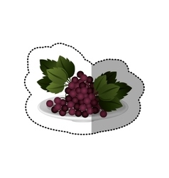 Colorful sticker of set collection grapes fruit vector