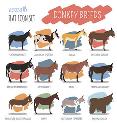 Donkey breeds icon set animal farming flat design vector