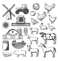 Farm agriculture and cattle vector